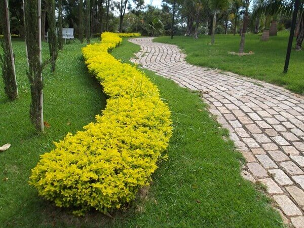 Pingo de ouro decora jardim
