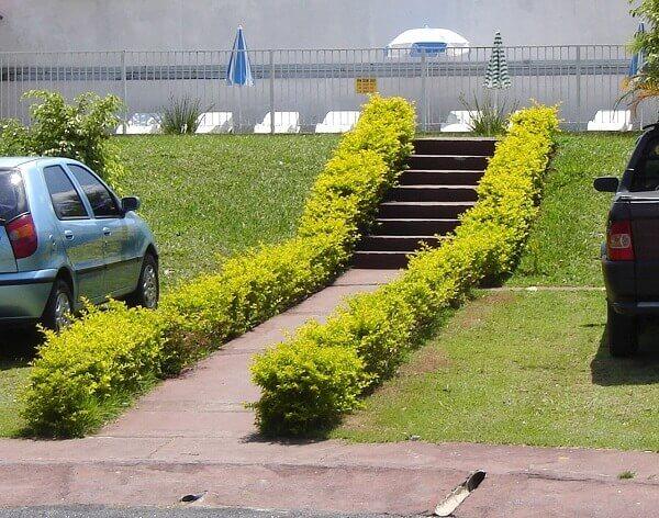Pingo de ouro em estacionamento