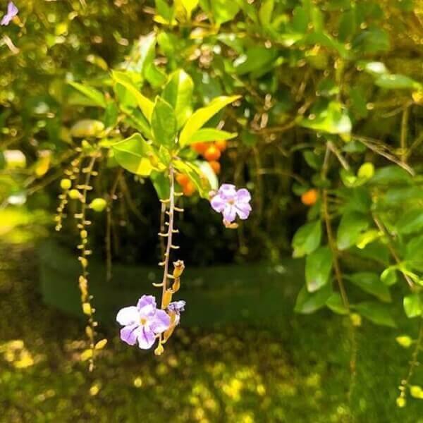 Pingo de ouro em jardim