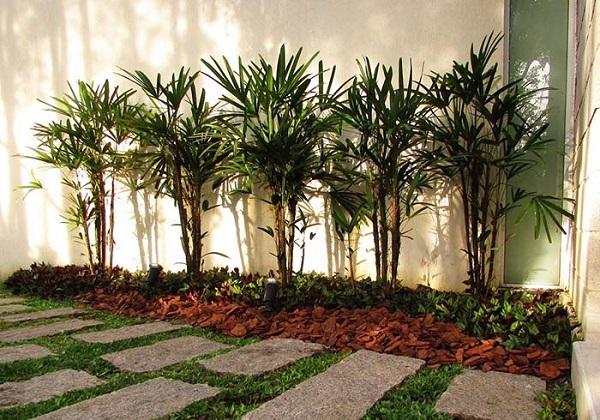 Tipos de palmeiras Ráfia em canteiro