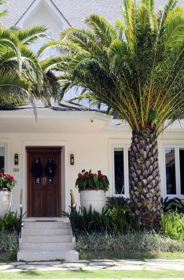 Tipos de palmeiras Washingtonia ou saia