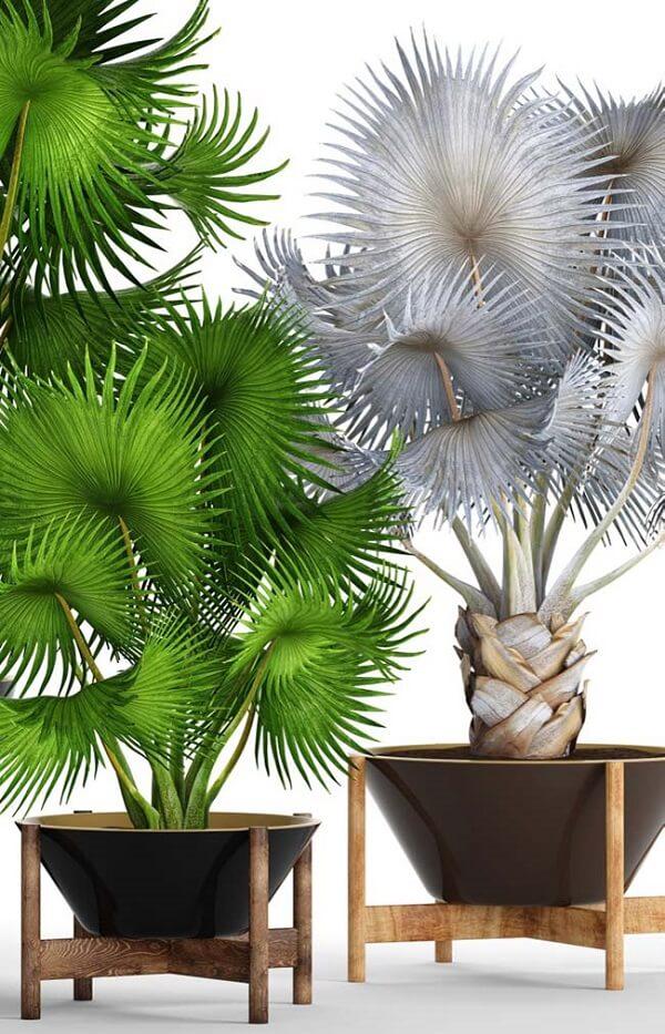 Tipos de palmeiras contraste das folhas