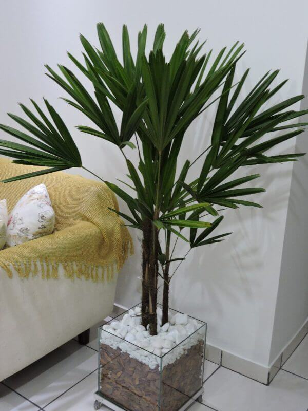 Tipos de palmeiras de pequeno porte em vaso na sala
