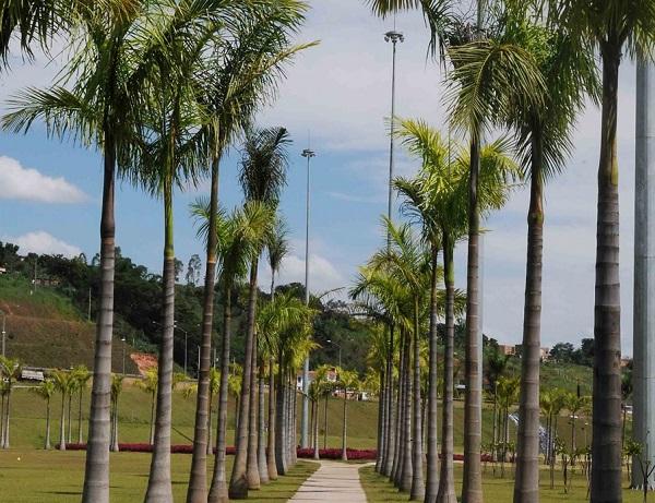 Tipos de palmeiras imperial em espaço público