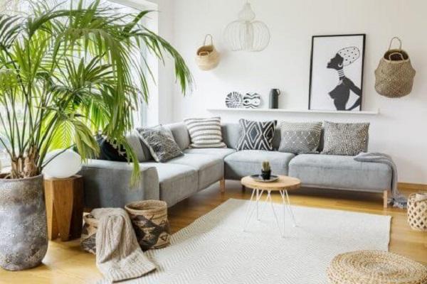 Tipos de palmeiras na decoração de interiores