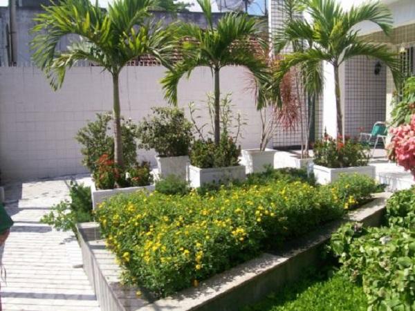 Tipos de palmeiras para decorar área externa
