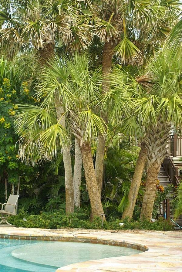 Tipos de palmeiras para jardim