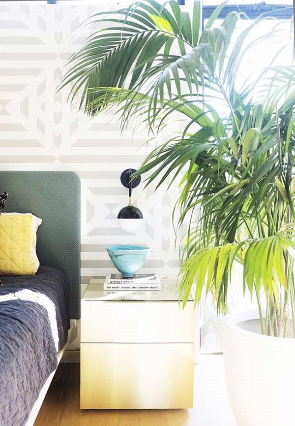 Tipos de palmeiras ráfia no quarto