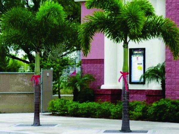 Tipos de palmeiras rabo de raposa na fachada de residencia