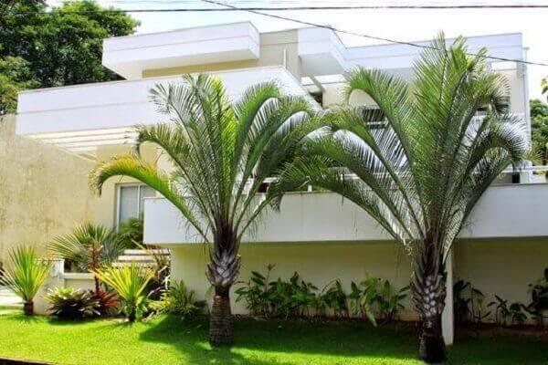 Tipos de palmeiras triângular