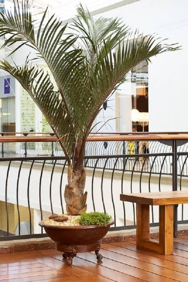Tipos de palmeiras triângulo na decoração de shopping center