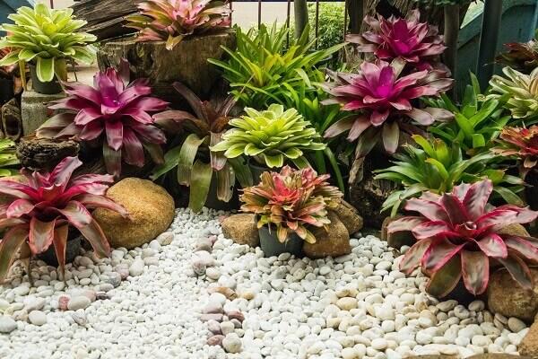 bromélias como plantas ornamentais