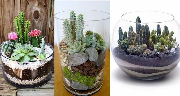 os vasos de cactos são muito utilizados para decorar jardins e residências