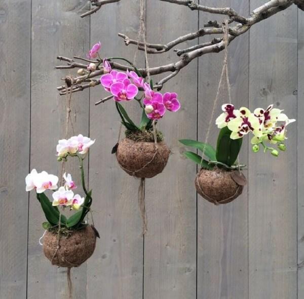 Kokedama de orquídeas penduradas na árvore