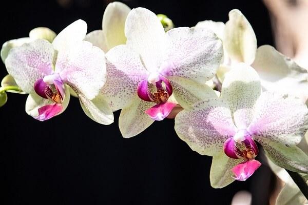 orquídeas brancas, plantas ornamentais