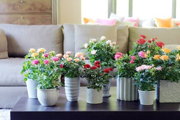 Flores da primavera: Use mini rosas para decorar a sala!