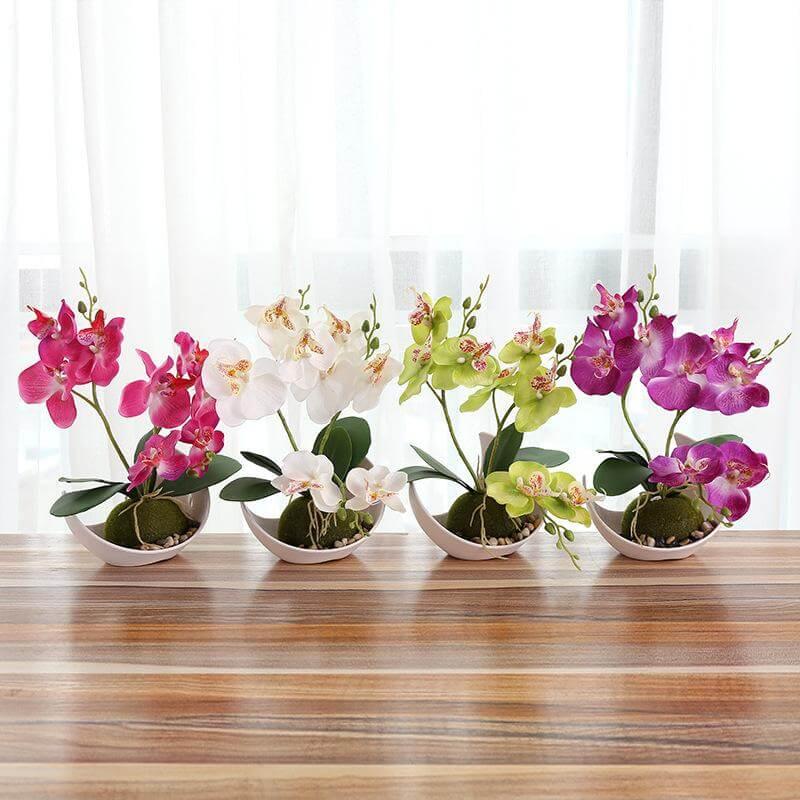 Flores da primavera Orquídeas