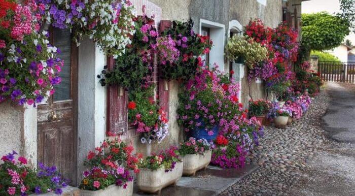 Fachada que encantam com a presença de flores de petúnia