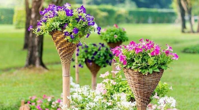 Flores de petúnia cultivadas em uma estrutura de madeira no jardim