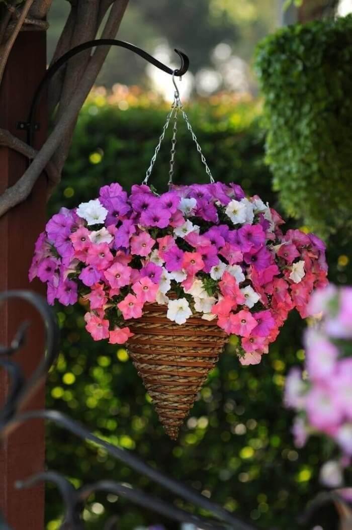 Flores de petúnia cultivadas em vaso criativo