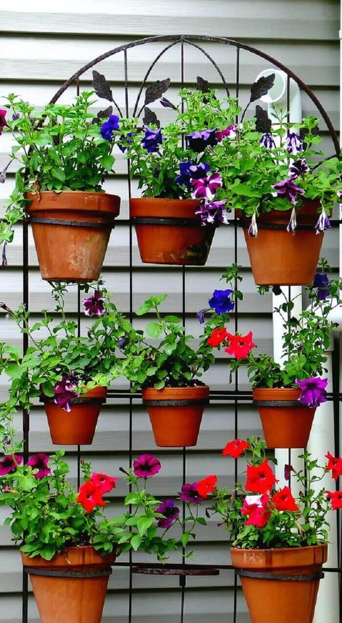 Flores de petúnia cultivadas em vaso