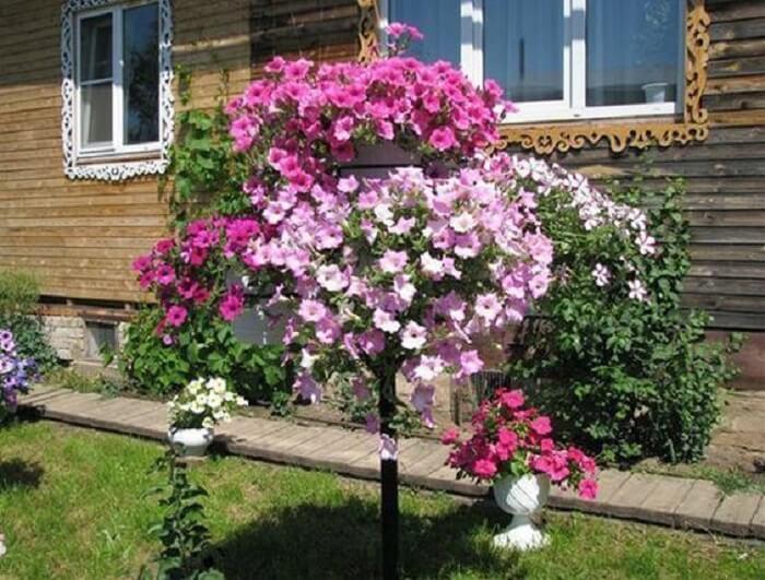 Flores de petúnia em diferentes tonalidades de rosa