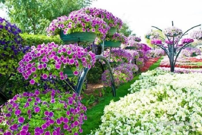 Flores de petúnia encantam a decoração da área externa