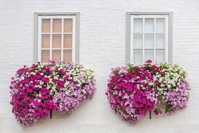 Petúnia cultivada em vasos encanta a decoração da fachada desta casa
