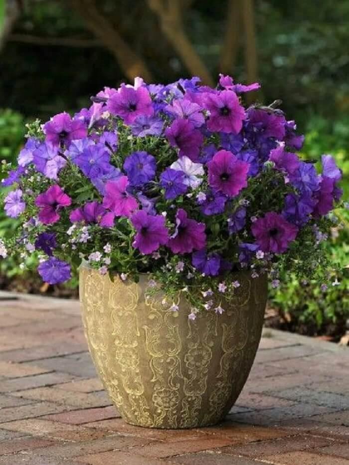 Petúnias em tons de rosa, roxo e branco cultivadas em vaso de cerâmica