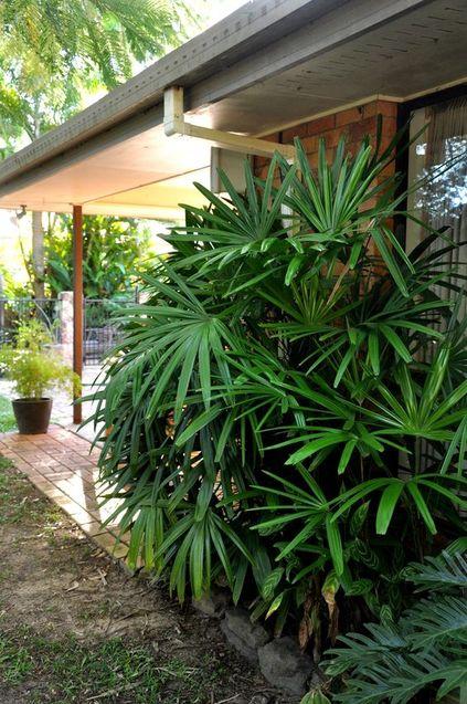 palmeira ráfia - área externa com muitos palmeiras ráfias