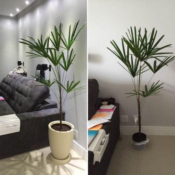 palmeira ráfia - modelos de palmeira ráfia