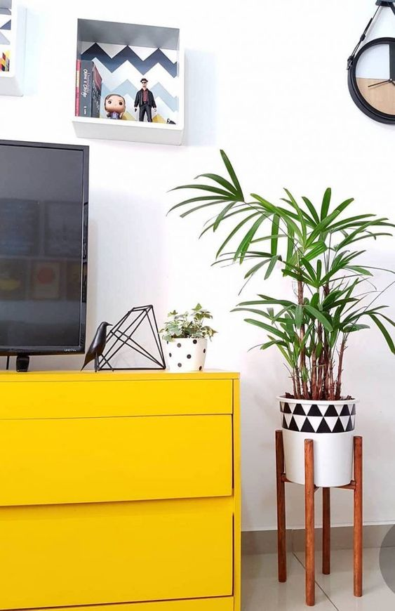 palmeira ráfia - palmeira ráfia ao lado de rack amarela