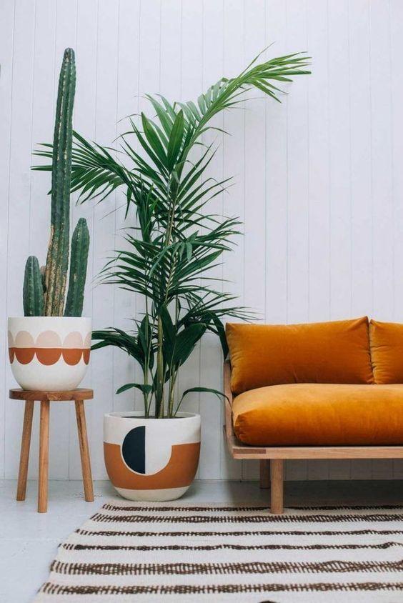 palmeira ráfia - palmeira ráfia ao lado de sofá