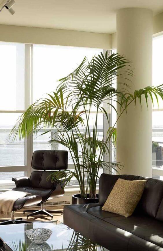 palmeira ráfia - palmeira ráfia com folhas altas em sala de estar