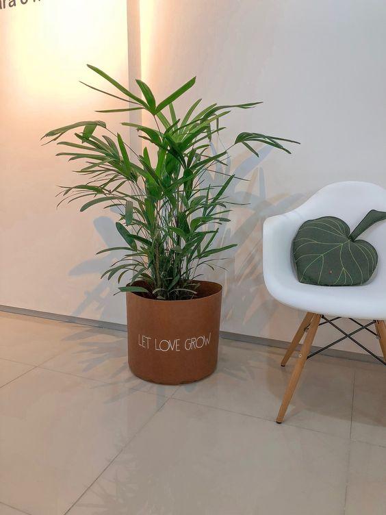 palmeira ráfia - palmeira ráfia em cachepot cosi