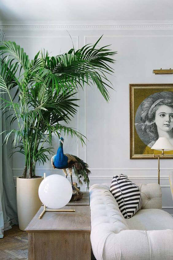 palmeira ráfia - palmeira ráfia em sala clássica