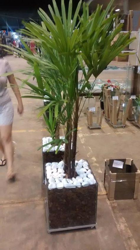 palmeira ráfia - palmeira ráfia em vaso de vidro grande