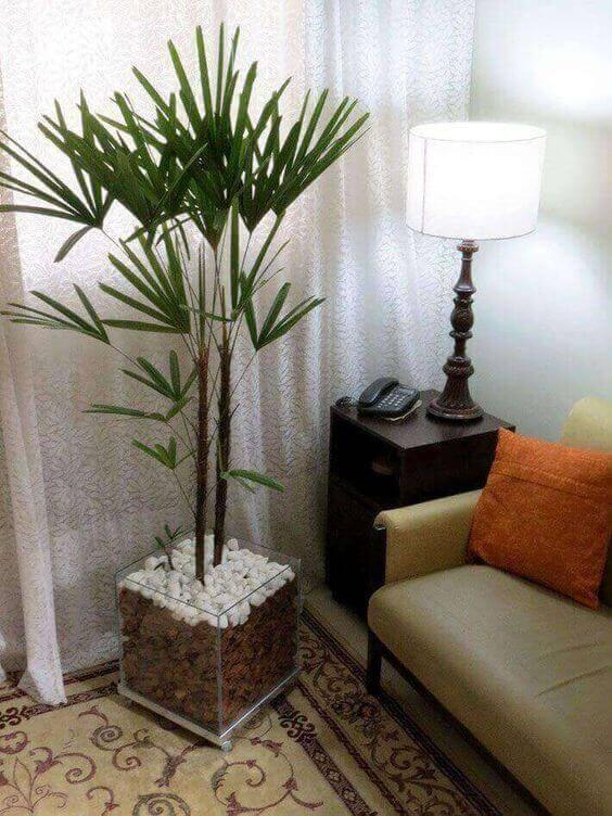 palmeira ráfia - palmeira ráfia em vaso de vidro quadrado em sala de estar