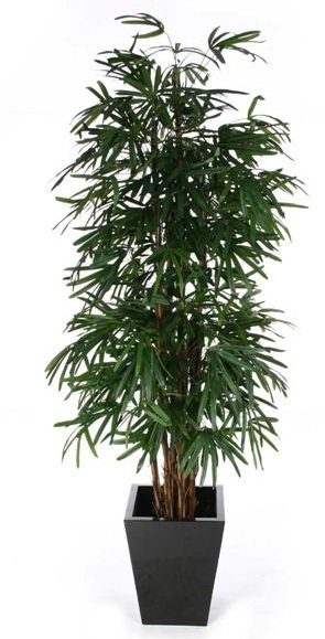 palmeira ráfia - palmeira ráfia em vaso preto geométrico