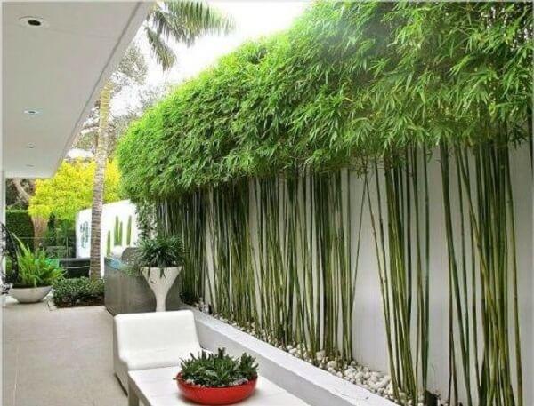 Cerca viva de bambu encantam a decoração do espaço