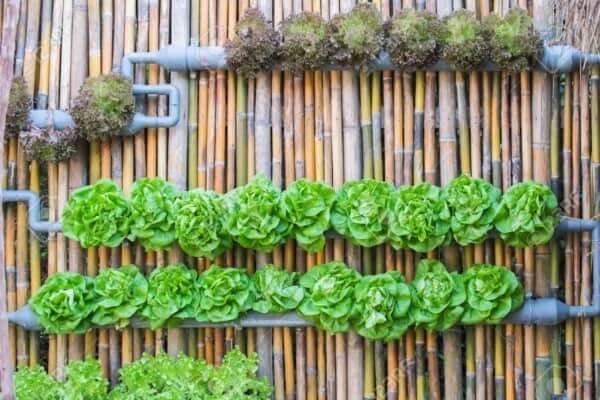 Modelo de cerca de bambu serve de sustentação para horta vertical