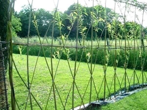 Modelo de cerca vida de bambu