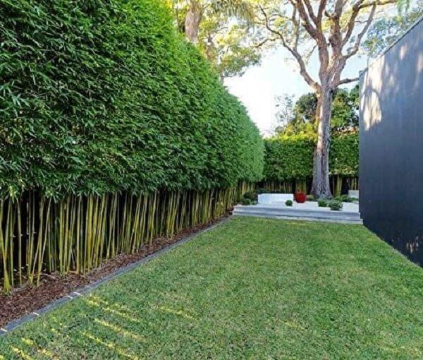 Modelo de cerca viva de bambu ornamental para casa