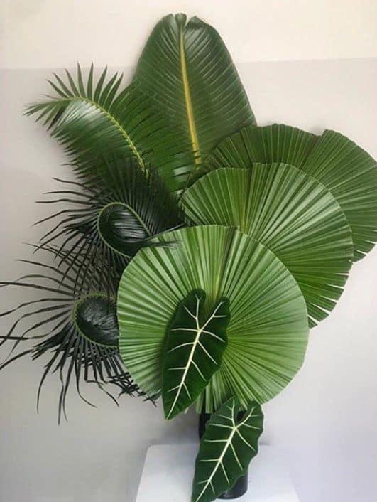 Arranjo de palmeira leque na decoração de casa