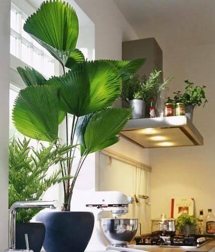 Cozinha decorada com palmeira leque