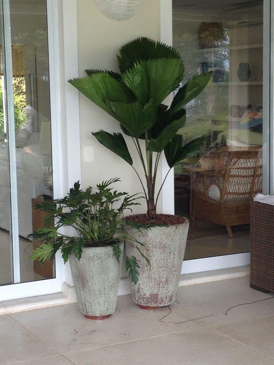 Palmeira leque em vaso na entrada de casa