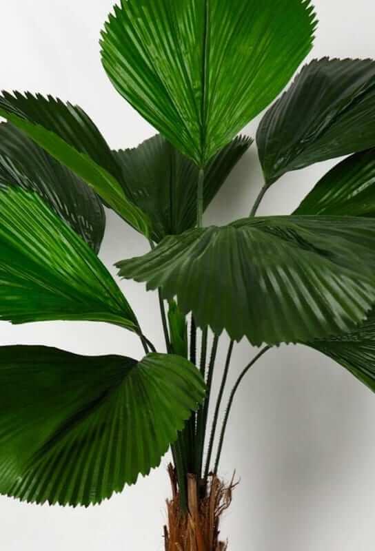 Decore sua casa com a palmeira de leque