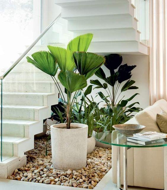 Sala de estar decorada com palmeira leque em vaso