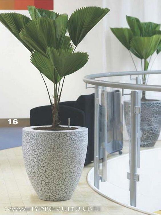 Vaso branco com palmeira leque