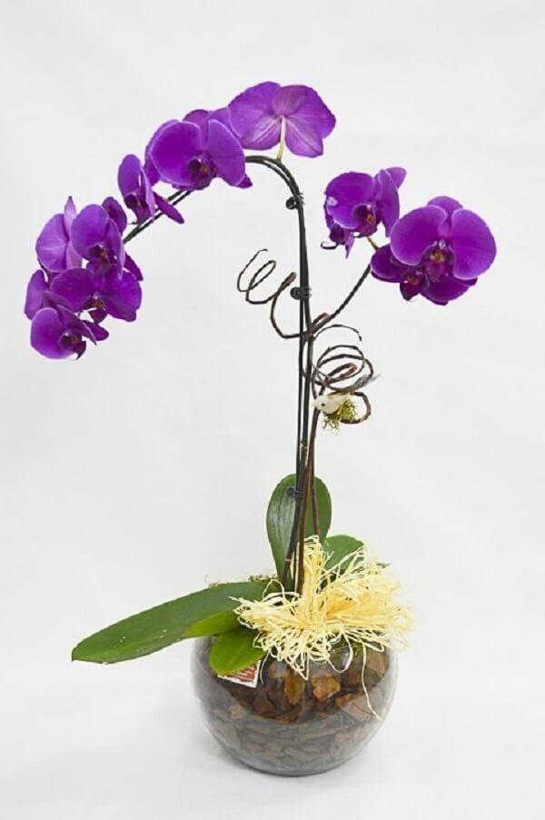 Orquídea roxa no vaso decorativo